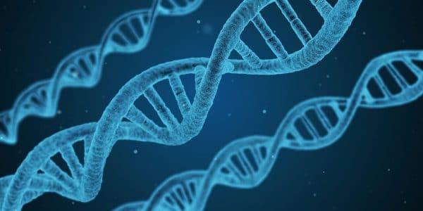 nos comportements sont dirigés par notre ADN